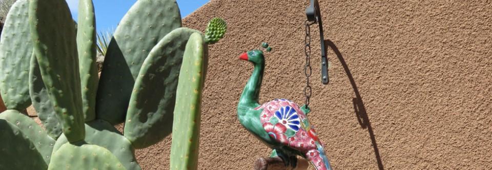Cactus Landscaping